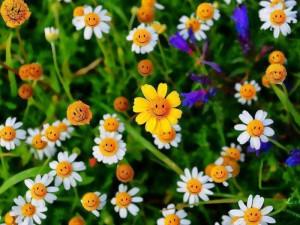 fiori-sorrisi